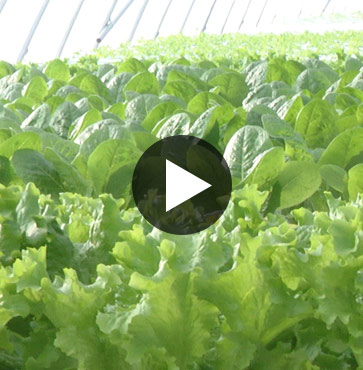 Agricultural Spotlight – Hydro Greens