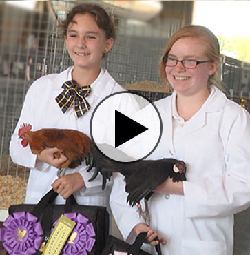 Tioga County Fair 2016 – Poultry Show