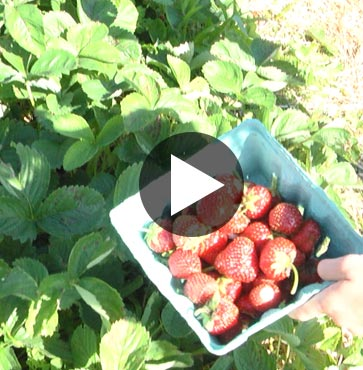 Pick a Patch at Rockberry Farm!