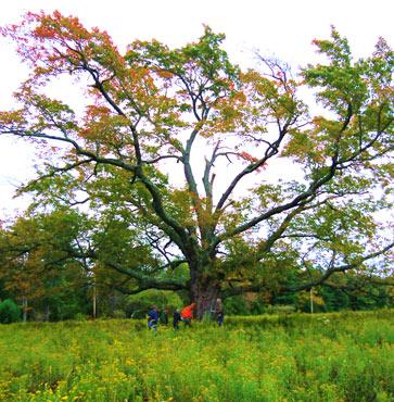 Big Trees of Pennsylvania
