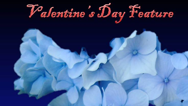 Valentine's Day: Flower Choices and Meanings