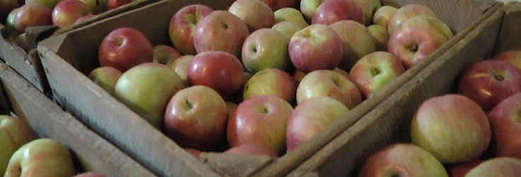 For the Love of Food – Apple Cider