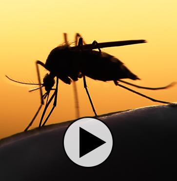 Dunham's Corner – Chase the Summer Bugs Away