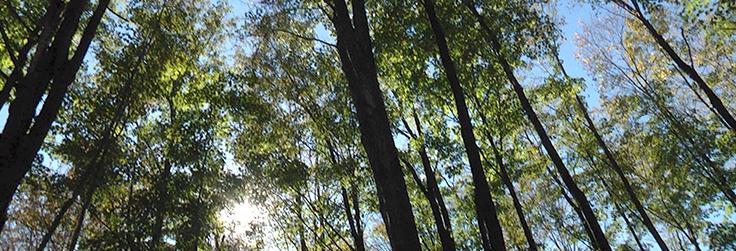 Ag Spotlight: A Walk in Penn's Woods