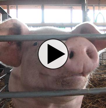 Tioga County Fair – Exhibiters Preview
