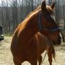 J & J HORSE RESCUE