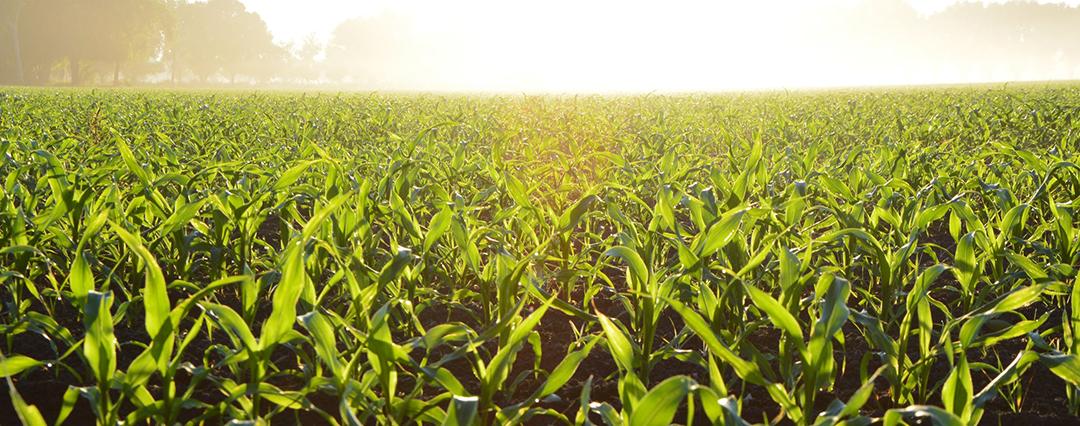 Agricultural Spotlight