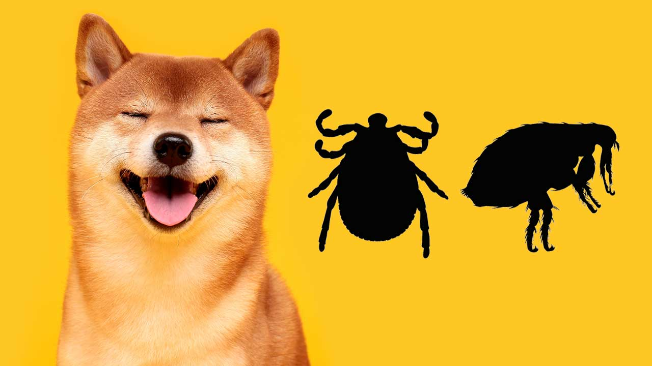Flea and Ticks All Year Long