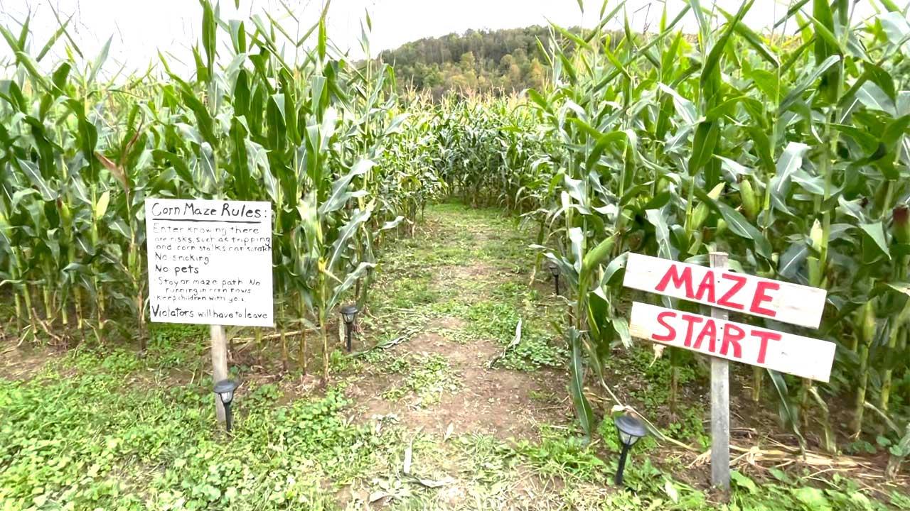 Miller's Corn Maze Opens October 1!